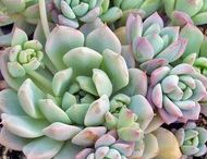 Cacti and Succulents / by Lindsay Freiberger