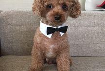 Cutest / Cute dog