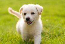 Puppy Power! / by Amanda Corbett