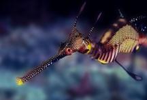 Underwater / Underwater wonders. Sea life. A journey beneath the ocean.
