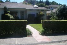 Hedges in Marin / Marin Hedges