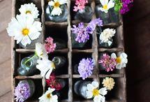 Flowers and vintage bottles / Flowers