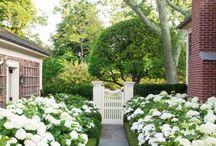 backyard / by Irene Kane