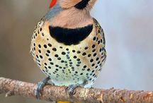 Fugle fotos