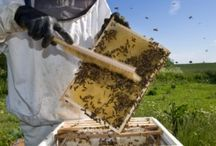 Honey Bees / Honey Bees Have Been Getting a Lot of Buzz Lately and we couldn´t be more happier about it at Georgia Honey Farm / www.georgiahoneyfarm.com