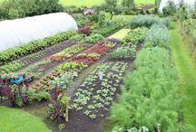 no dig organic gardening - UK / no dig gardening, growing veg, soil, organic growing, permaculture, edible crops, perennials, fruit