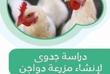 دراسة جدوى لإنشاء مزرعة دواجن / دليل مزرعتى لخدمات الثروة الحيوانية ... الإصدار الثالث