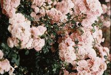 * Floral *