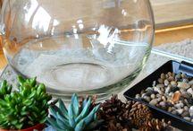 suculentas em vidro