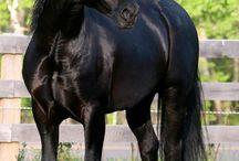 atlara aşığım