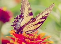Butterflys to mom