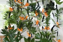 Indoor plants & floral. / bloemen en planten in je interieur.