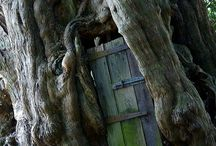 Trees / wonders of nature... trees and the stories they can