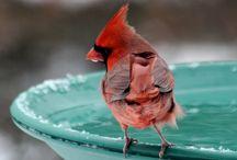 Backyard Bird Oasis / Items to help transform your back yard into a bird oasis