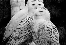 Birds/madarak