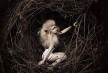 Fantastic - Kuş Bird