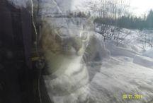 kissansilmin