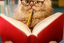 Cats with Glasses / Cool cat eye wear