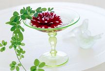 Dish Gardens and Terrariums / Check out the best of the best dish gardens and terrariums!