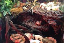 Crazy Crabs!
