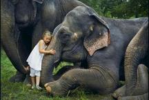 My elephant love