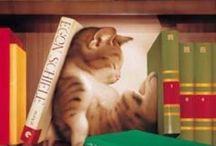 Кошки на открытках