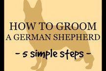 German Shepard info / by Mary