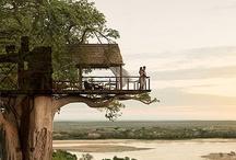 GARDEN...treehouses