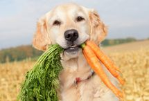 Pets Healthy Lifestyle / We have some healthy suggestions for your pet.