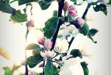 Lente/zomer deco