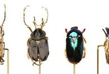 Beetle Jewellry / Jewellry made from or inspired by beetles.