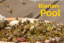 Bienenfreundlicher Nutzgarten | Save the bees