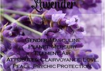 Lavender Magic / The scent of fresh lavender has the ability to transport us to a place of utter serenity and refreshing calm. For centuries, many a culture have taken the opportunity to use this herb of tranquility to invite soothing, peaceful energies and usher in a cleansing air. -- Lavender Magical Properties and Uses