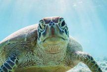 Gorgeous turtles