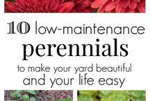 Shrubs & Perennials