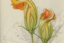 botanica disegni