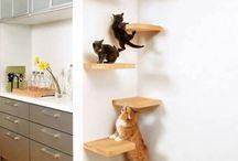Kissajuttuja / Cat stuff