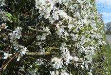 Hedge in meadow