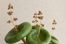 Plantas que inspiram