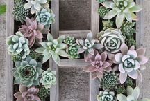 Succulents / Tips for growing healthy succulents