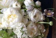 Flowers / by Glenda Satterfield