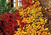 Autumn bliss / by nancy hirst
