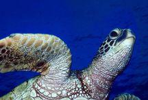 Tapety - zwierzęta - wodne stworzenia - żółwie wodne