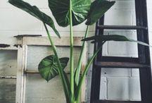 plant en spiegel