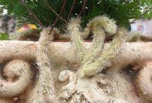 Vihreät Tassut puutarhapuuhissa / Vihreiden Tassujen puutarhapuuhasteluja
