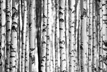 Fotobehang Bos / Forest / Diverse maten en kleuren bos fotobehang. In 2, 4 en 8 delen.