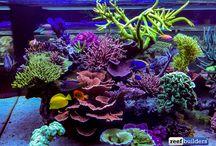Reef stuff