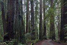 Armstrong Woods State Park / Only 1 mile from West Sonoma Inn & Spa We love where we live!!!