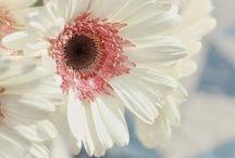 Flowers / by Kim Kitzsteiner
