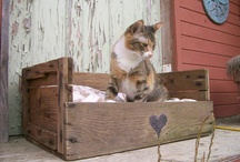 Cica/kutya ágyak